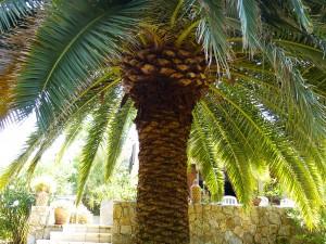 Vue de la palmeraie de la villa Upozzu